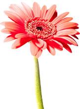 お花のご注文